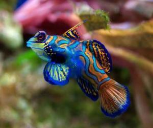 Puzzle Joli poisson tropical