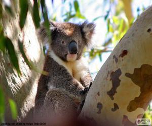 Puzzle Koala dans un arbre