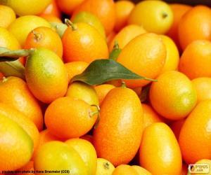 Puzzle Kumquat ou Fortunella