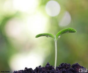 Puzzle La naissance d'une plante