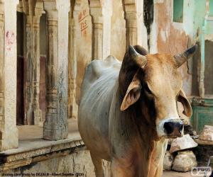 Puzzle La vache Sainte, Inde