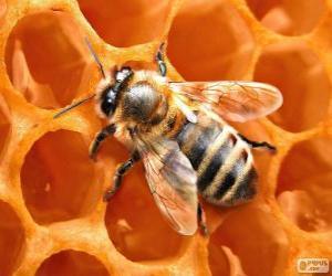 Puzzle L'abeille à miel. Les abeilles qui produisent le miel