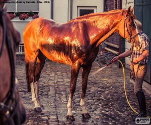 Puzzle Laver un cheval