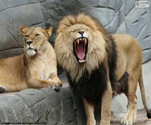 Puzzle Leone et leon