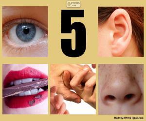 Puzzle Les cinq sens