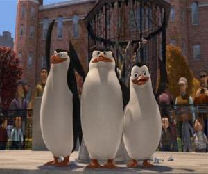 Puzzle Les pingouins du zoo de Central Park