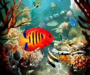 Puzzle Les poissons tropicaux