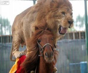 Puzzle Lion et cheval procédant à leur performance