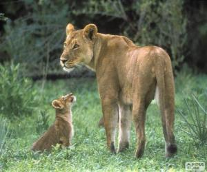 Puzzle Lionne avec son petit