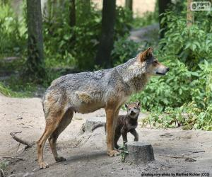 Puzzle Loup et élevage