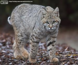 Puzzle Lynx rouge