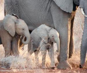 Puzzle Maman contrôlant le petit éléphant