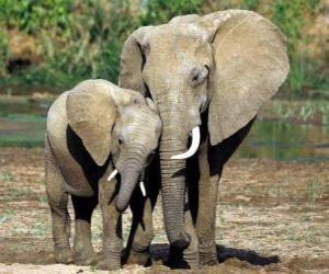 Puzzle Maman contrôler son petit éléphant avec l'aide da trompe