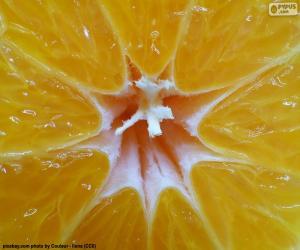 Puzzle Mandarine à l'intérieur