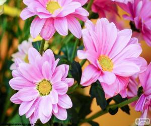 Puzzle Marguerites roses