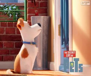 Puzzle Max devant la porte