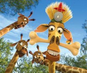 Puzzle Melman la girafe, déguisé sous les yeux curieux des autres girafes
