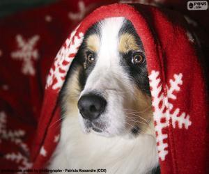 Puzzle Noël chien