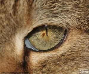Puzzle Oeil de chat