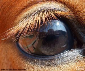 Puzzle Oeil de cheval