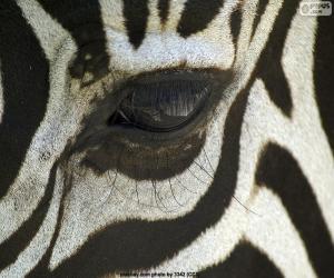 Puzzle Oeil de zèbre