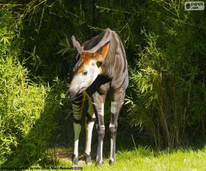 Puzzle Okapi