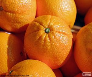 Puzzle Oranges