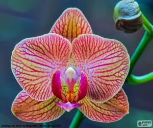 Puzzle Orchidée Phalaenopsis