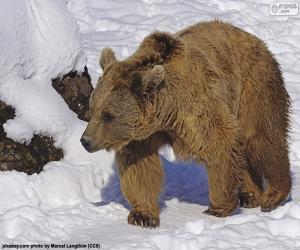 Puzzle Ours brun sur la neige