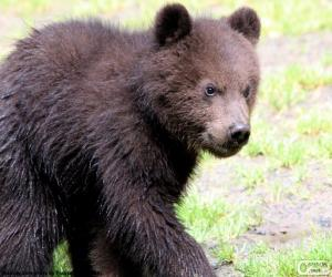 Puzzle Ourson, bébé ours