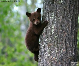 Puzzle Ourson brun grimpe un arbre