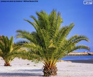 Puzzle Palmiers sur la plage