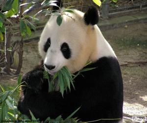 Puzzle Panda géant