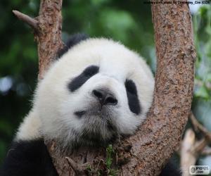 Puzzle Panda qui dort