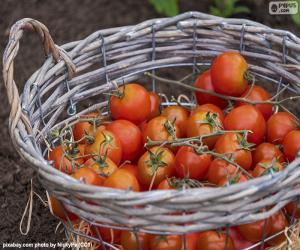 Puzzle Panier de tomates