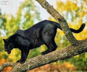 Puzzle Panthère noire sur une branche d'un arbre