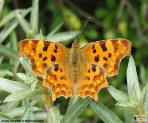 Puzzle Papillon ailes ouvert
