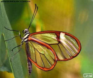 Puzzle Papillon cristal, Greta oto
