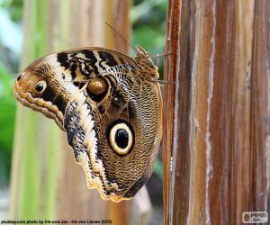 Puzzle Papillon hibou