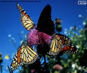 Puzzle Papillon monarque