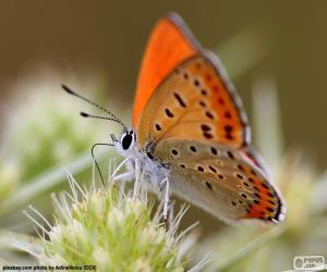 Puzzle Papillon orange