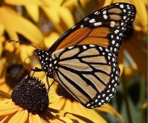 Puzzle papillon sur une fleur jaune