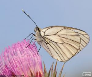 Puzzle Papillon sur une fleur rose