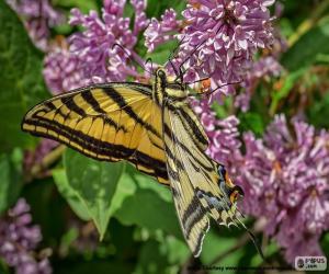 Puzzle Papillon Tigré du Canada