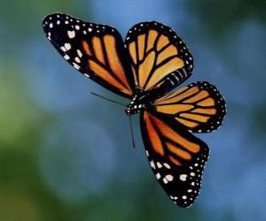 Puzzle Papillon volant
