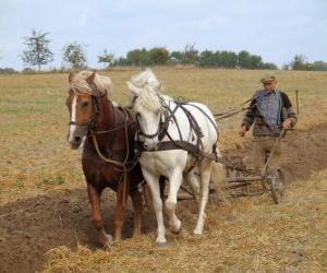 Puzzle Paves de labourer avec des chevaux