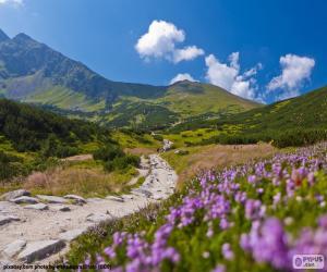 Jeux de puzzle de paysages naturels casse t tes for Foto paesaggi naturali gratis
