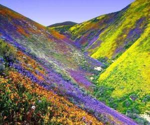 Puzzle Paysage du printemps
