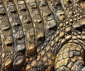 Puzzle Peau de crocodile