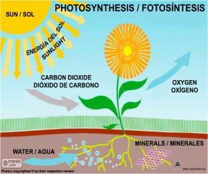 Puzzle Photosynthèse